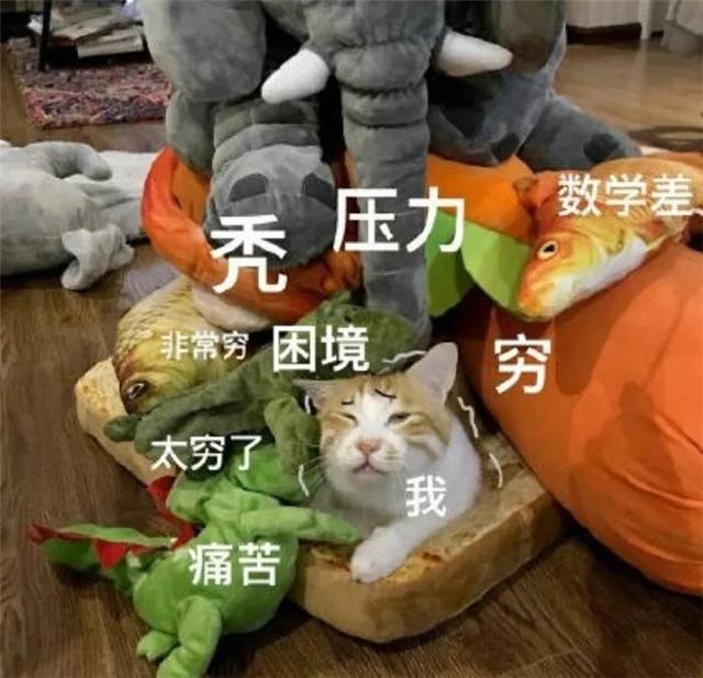 诚泰执法记录仪镜头下的温情:杭州小伙逆行被查后崩溃下跪(附视频)